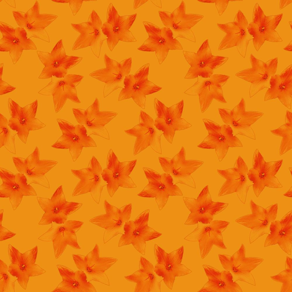 Double Starflower Pattern - image 2 - student project
