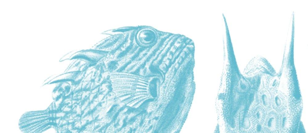 Shedd Aquarium - image 3 - student project