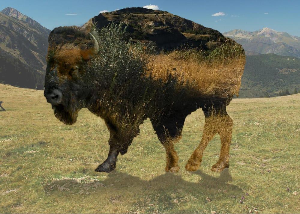 Buffalo - image 1 - student project