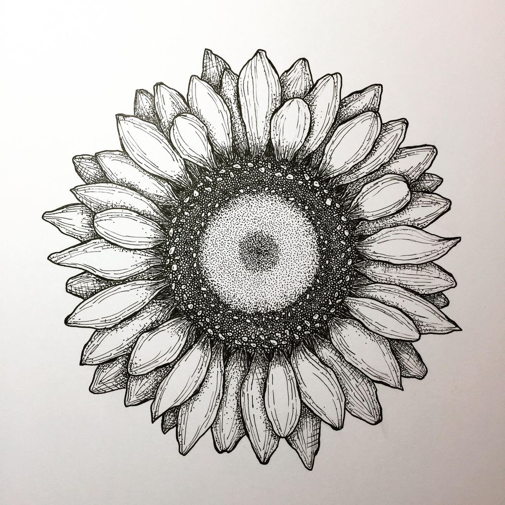 Ink Pen Sunflower - image 1 - student project