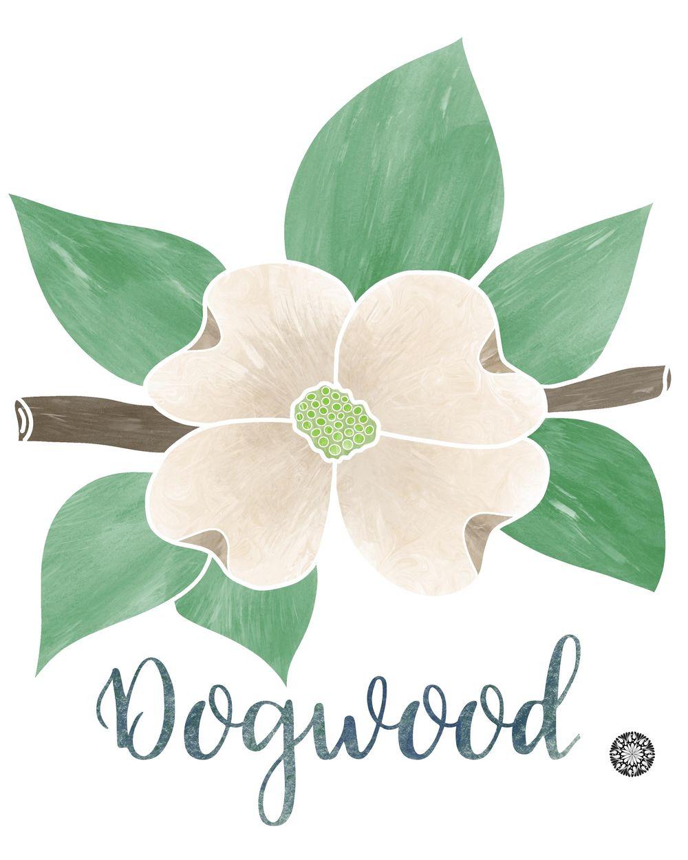 Dogwood ~ Mary Elizabeth Martin - image 1 - student project