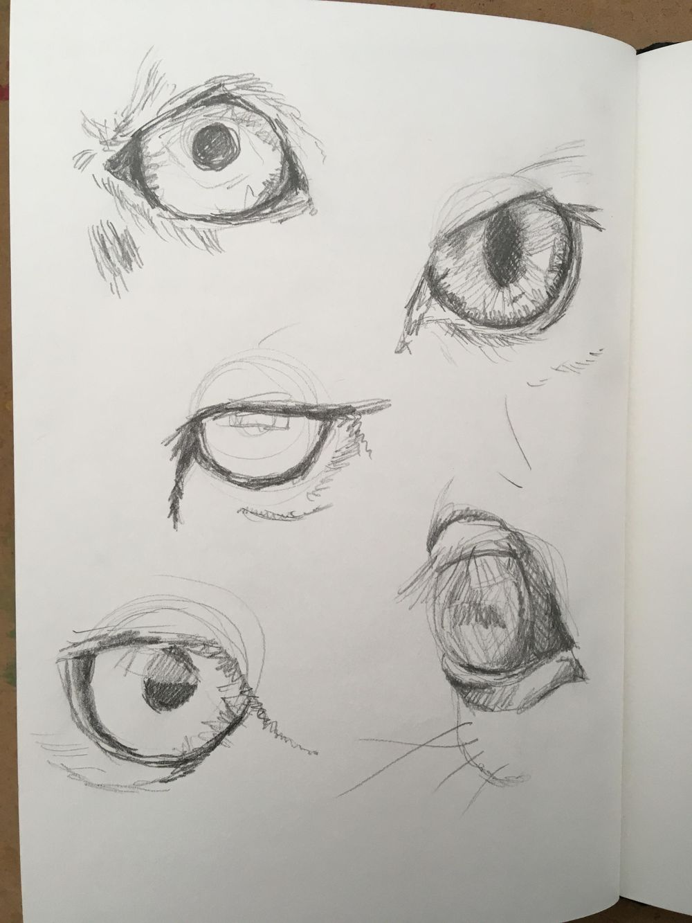 Drawing and painting animal eyes - image 1 - student project