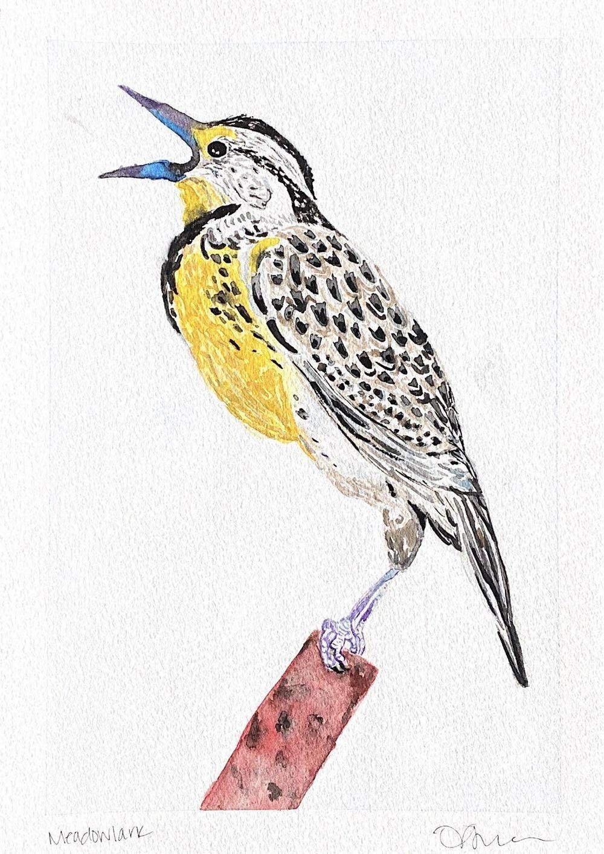 Meadowlark - image 1 - student project