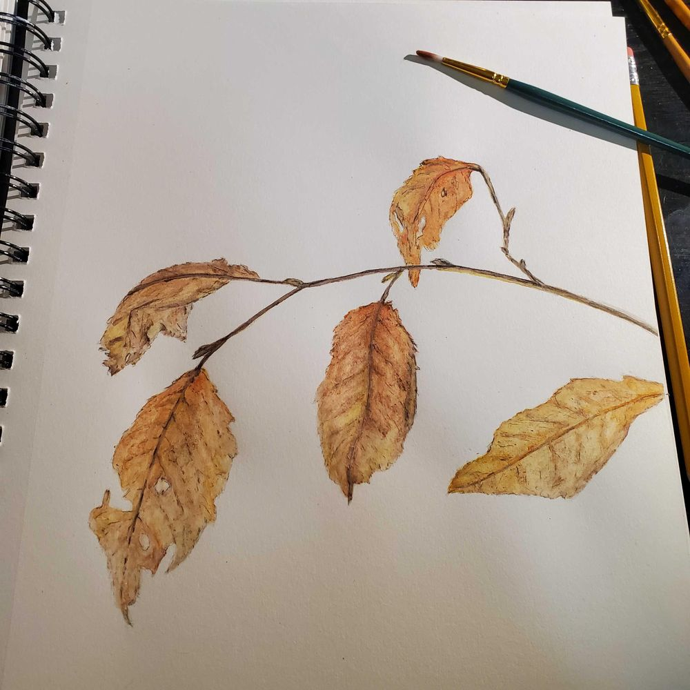 Watercolor in the woods  - winter leaf - image 2 - student project