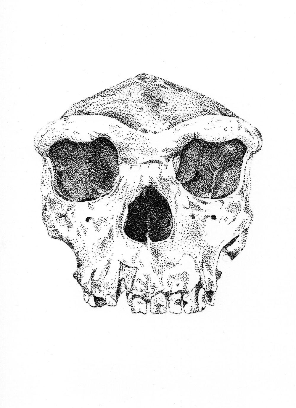 Homo heidelbergensis - image 1 - student project