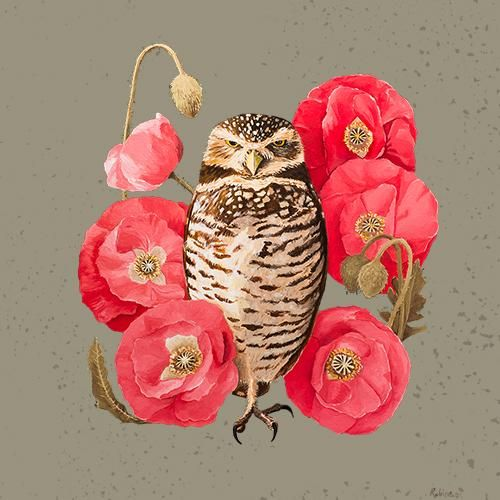 Burrowing Owl - image 3 - student project