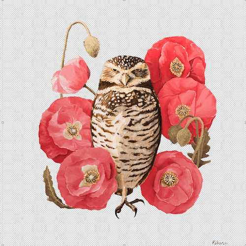Burrowing Owl - image 2 - student project