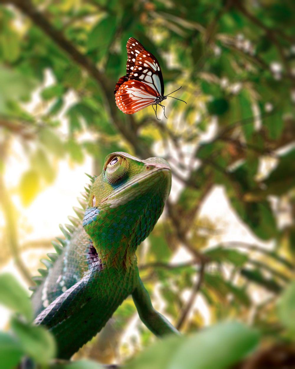 Photorealistic Chameleon - image 1 - student project
