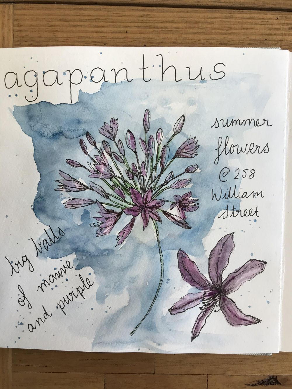 Agapanthus - image 1 - student project