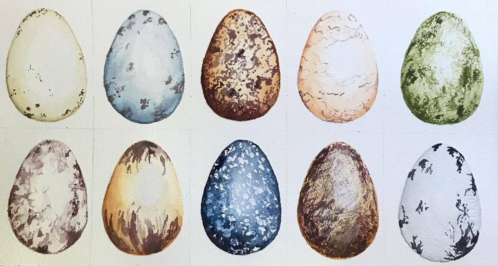 Watercolour eggs - image 1 - student project