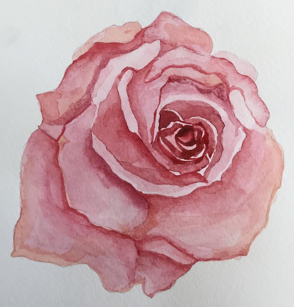 Watercolour roses - image 3 - student project