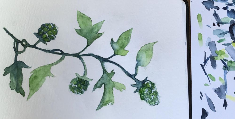 Greenery in watercolour - image 2 - student project