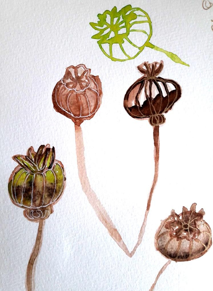 Seeds! - image 1 - student project