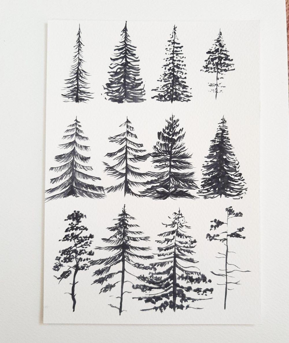 Pine tree magic.... - image 1 - student project