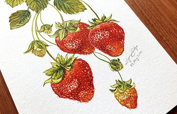 Learn to Paint Realistic Strawberries Without Reference - image 1 - student project
