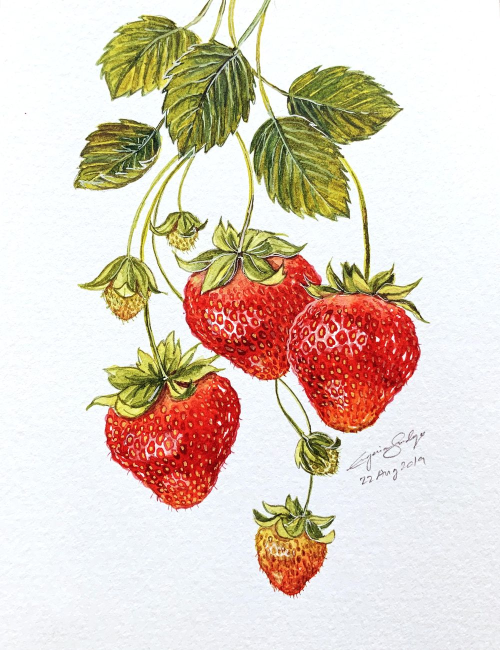 Learn to Paint Realistic Strawberries Without Reference - image 2 - student project