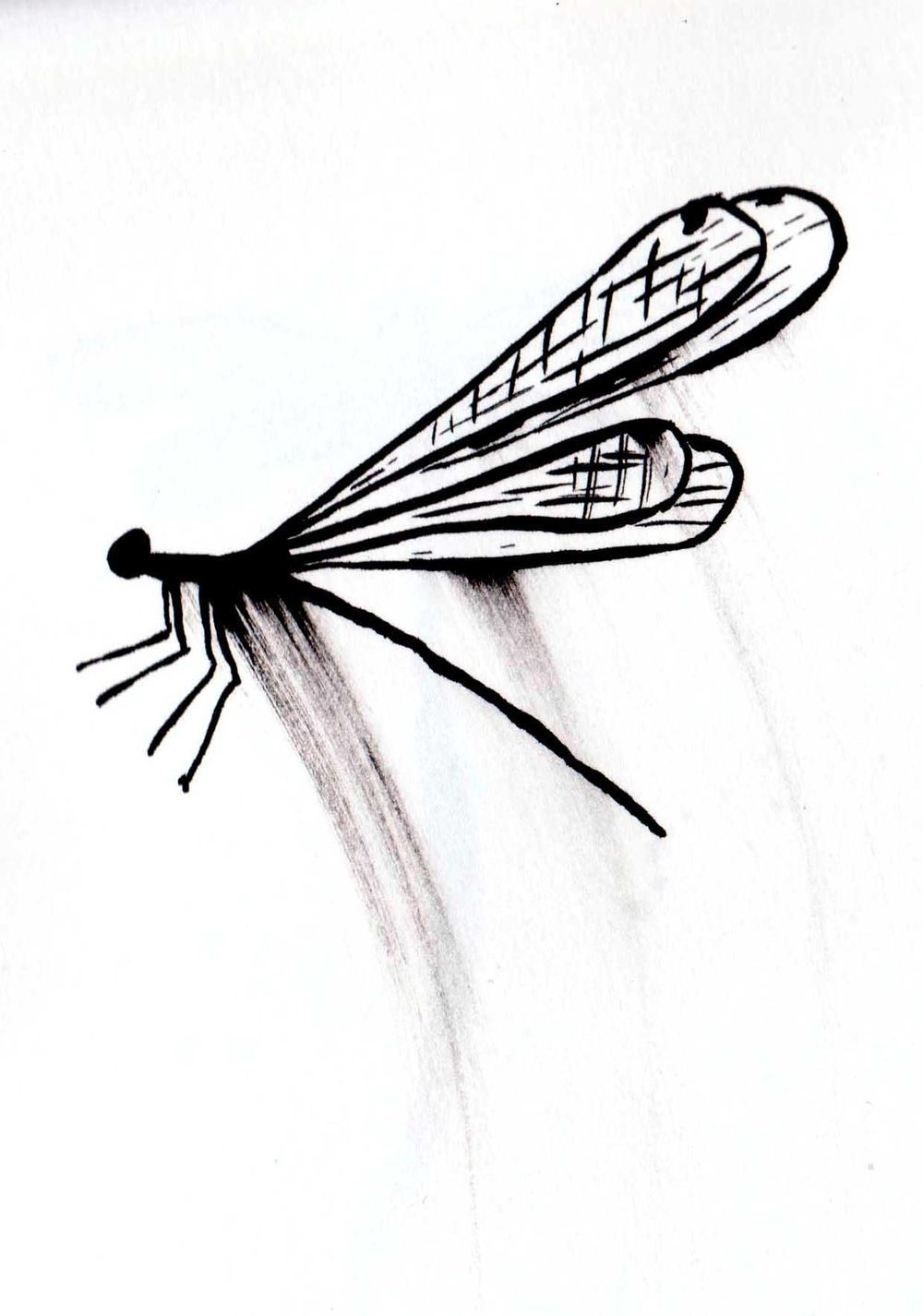 Dragonflies - image 2 - student project