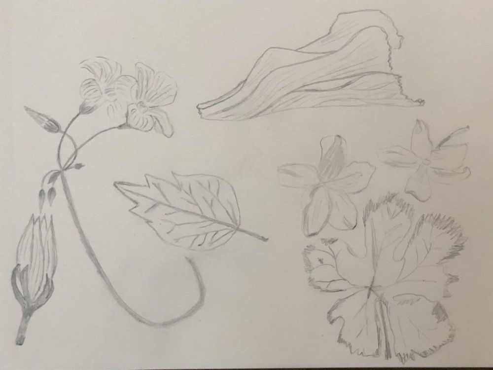 Inspiration from my yard in Greece - image 3 - student project
