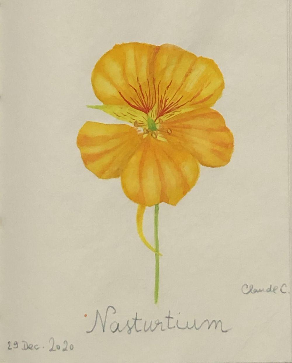 Nasturtium Flower - image 1 - student project