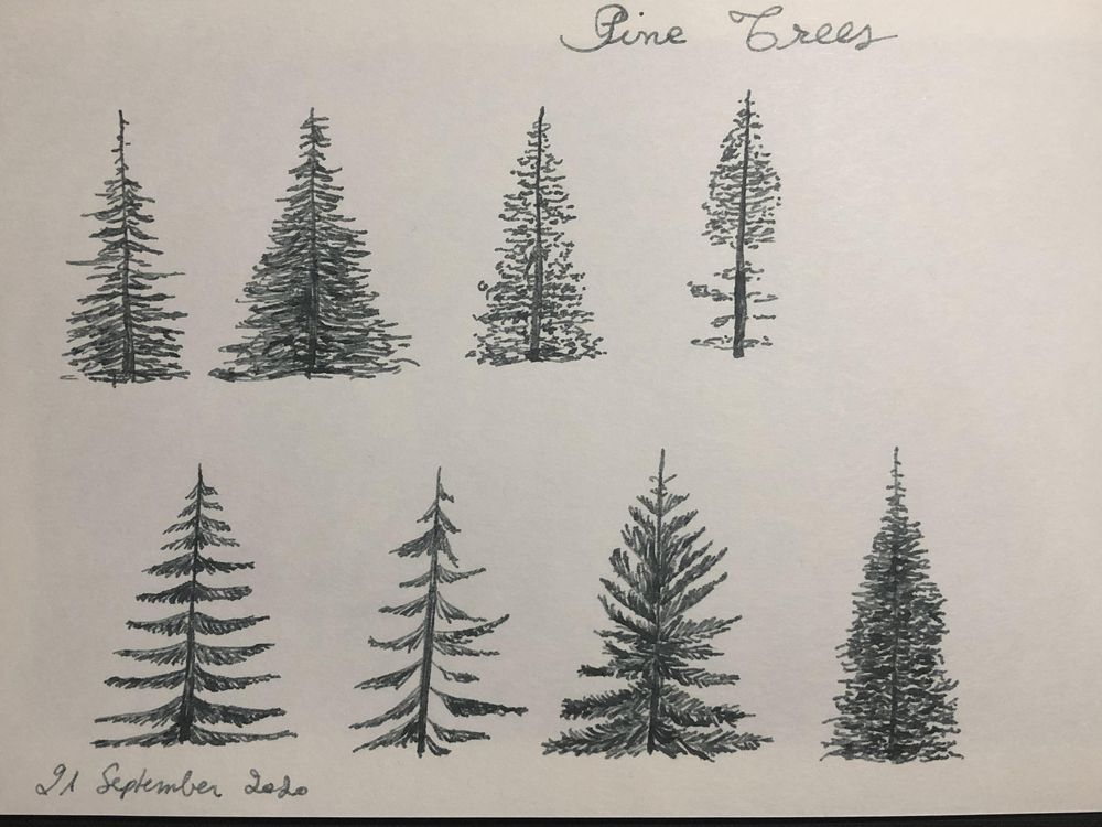 Pine Trees - image 1 - student project