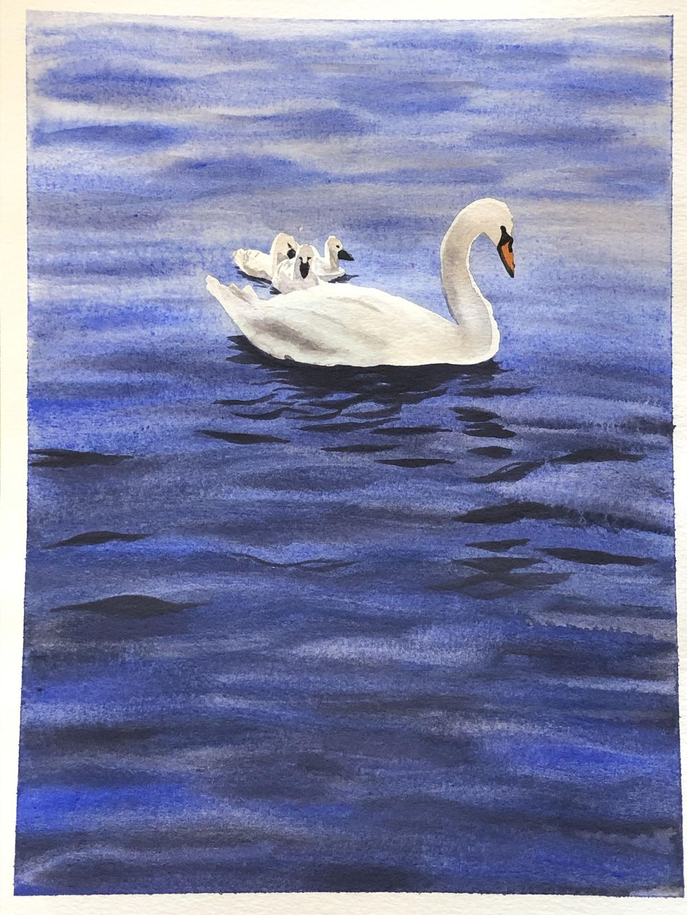 Swans! - image 1 - student project