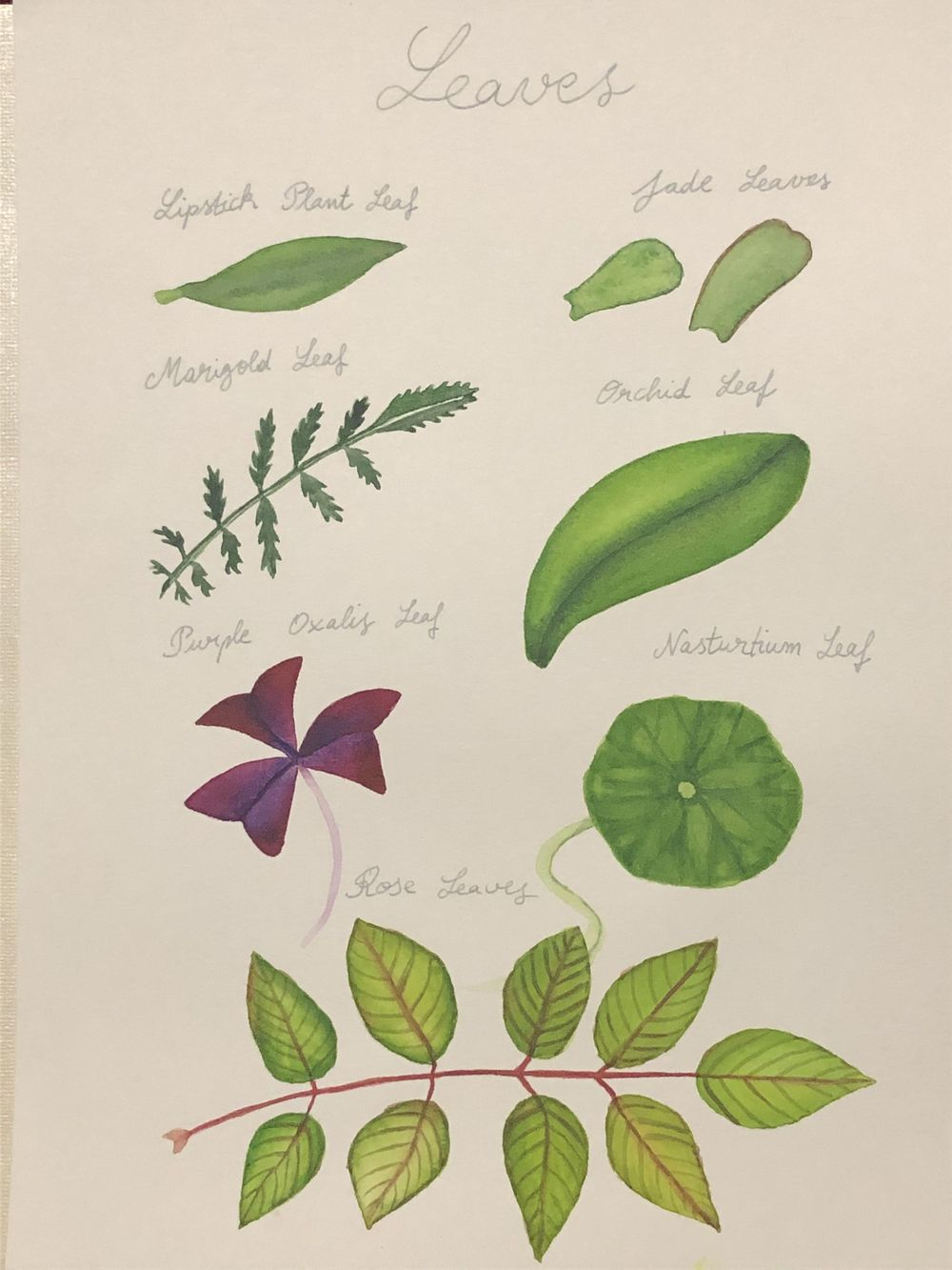 Watercolor Leaves and Oxalis - image 1 - student project