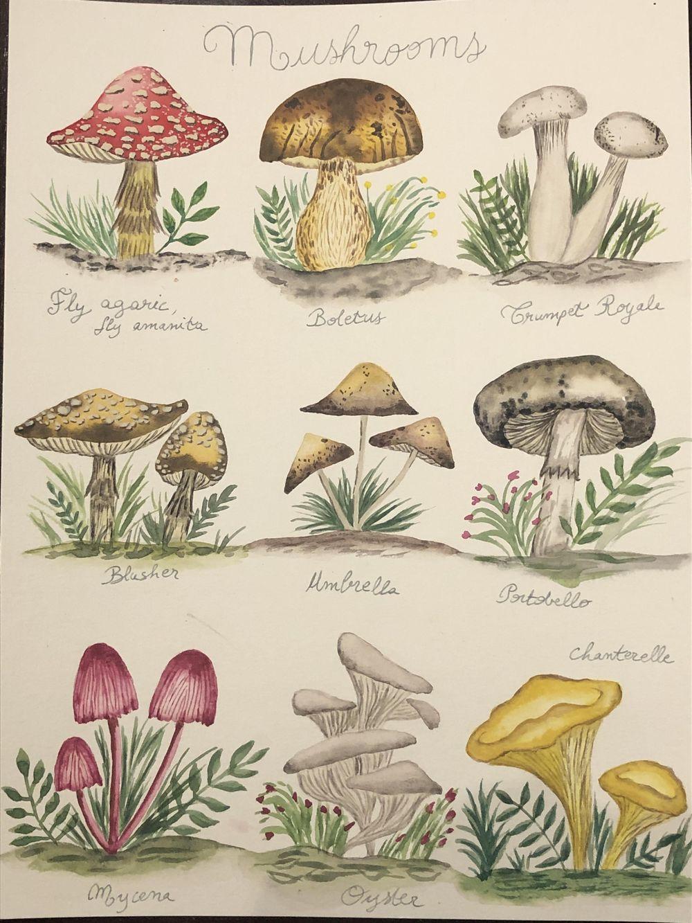 Mushrooms! - image 1 - student project