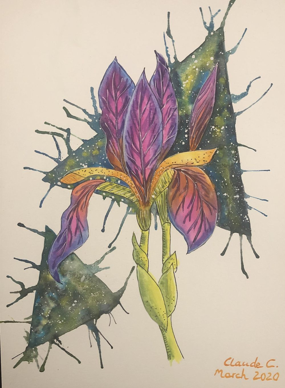 Colorful Iris! - image 1 - student project