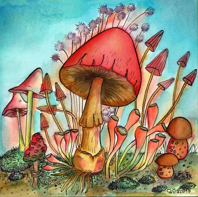 Mushrooms with Watercolors and Ink - image 1 - student project
