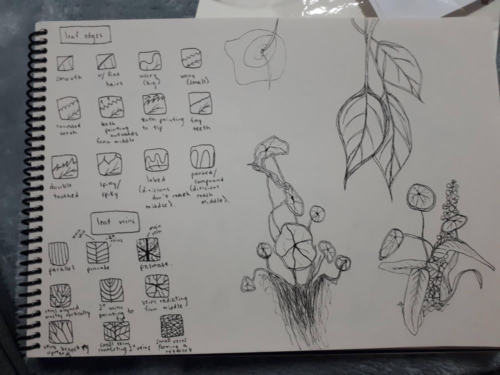 Plants/mushroom library - image 1 - student project