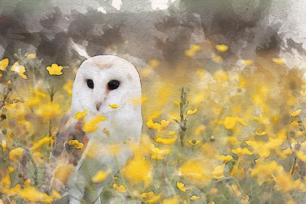 Owl - image 2 - student project