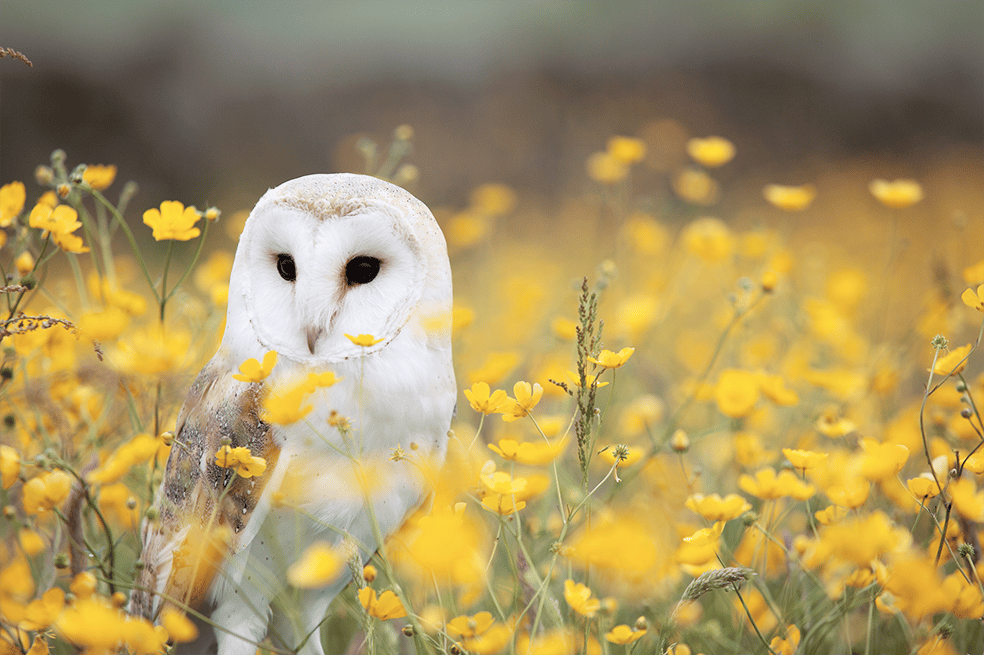 Owl - image 1 - student project