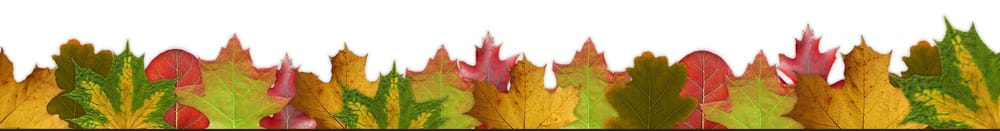 Fall is Nice (Sample Project) - image 2 - student project