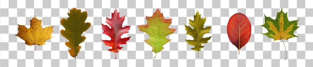 Fall is Nice (Sample Project) - image 1 - student project