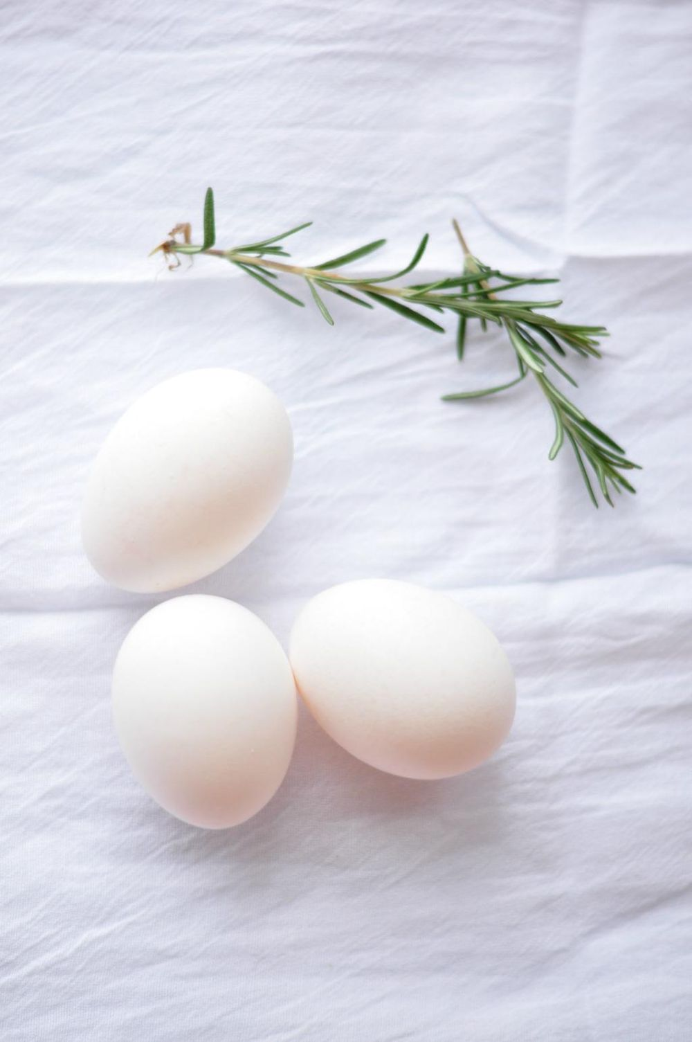 Simple Eggs - image 1 - student project
