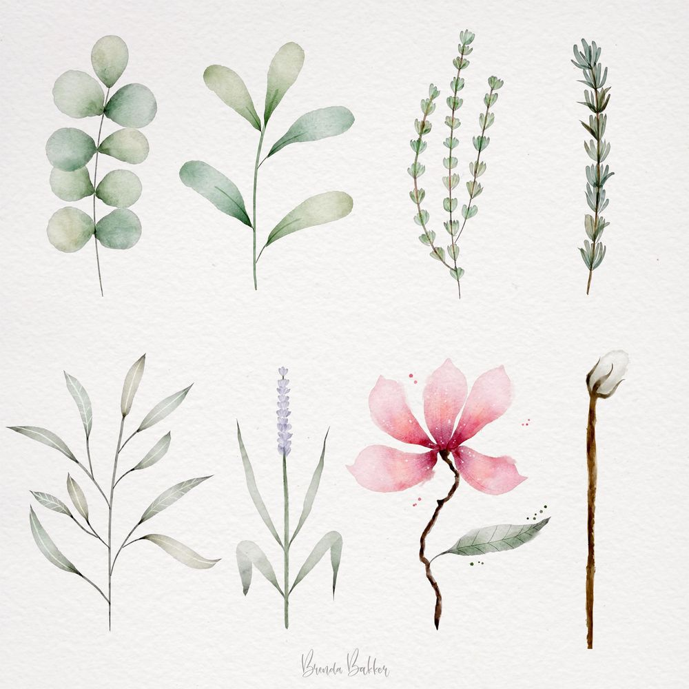 My Botanics for this class - image 1 - student project