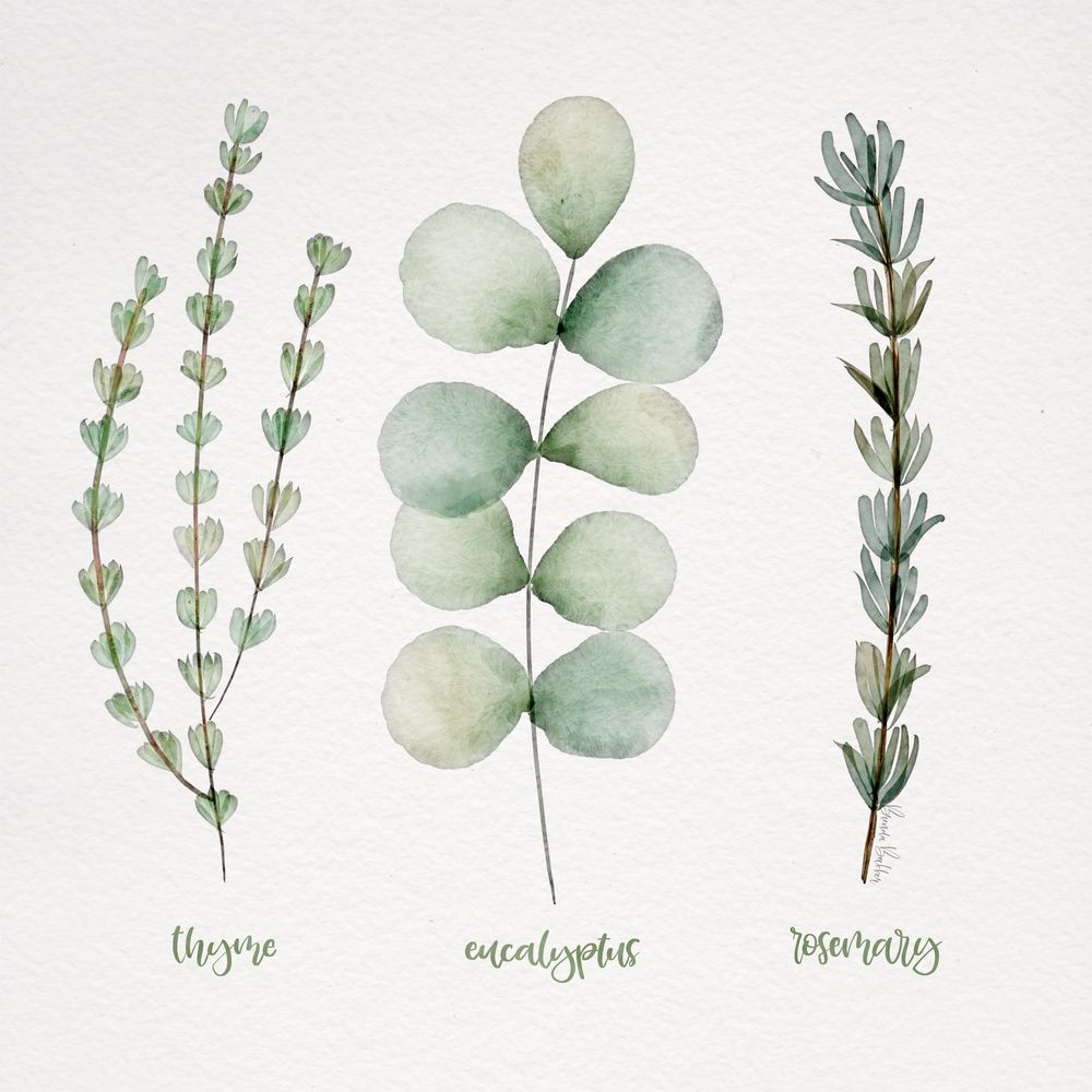 My Botanics for this class - image 2 - student project
