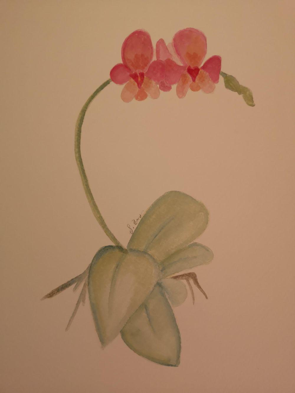 Orhideje - image 1 - student project