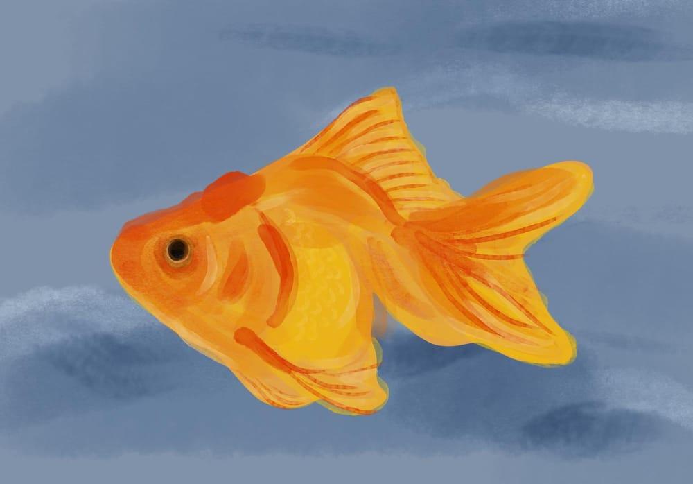 Goldfish - image 1 - student project