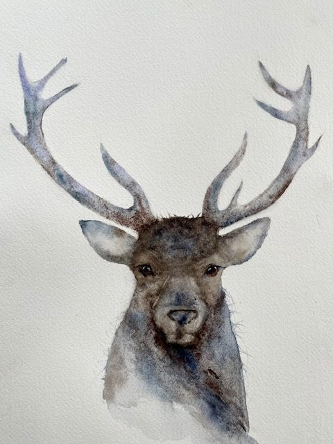 my stag - image 1 - student project