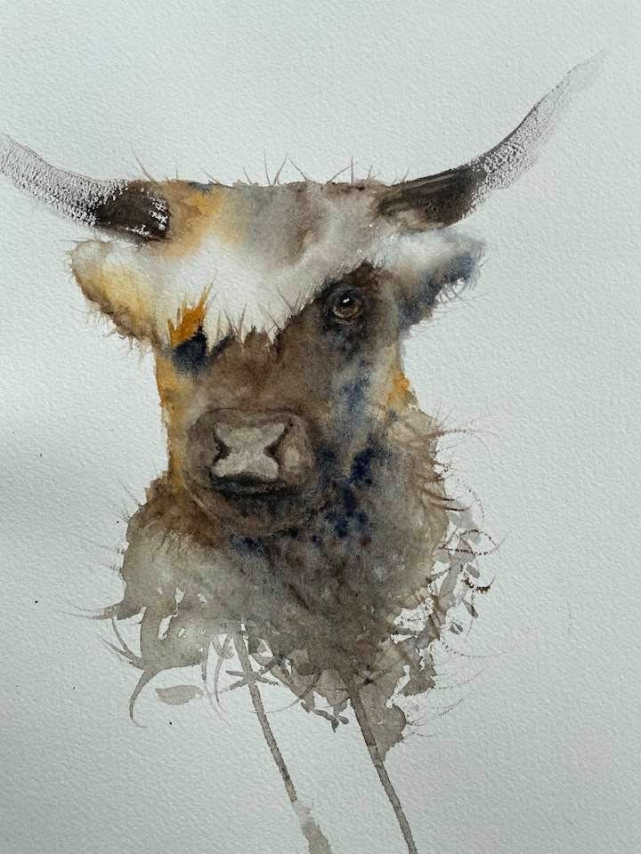 my Highland cow - image 1 - student project