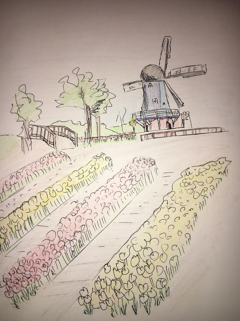 Sketch of the tulip festival in Holland, MI - image 1 - student project