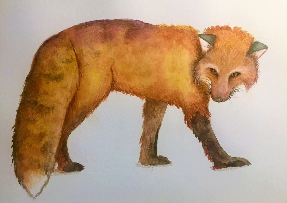 Fox with Texture for Louise De Masi - image 1 - student project