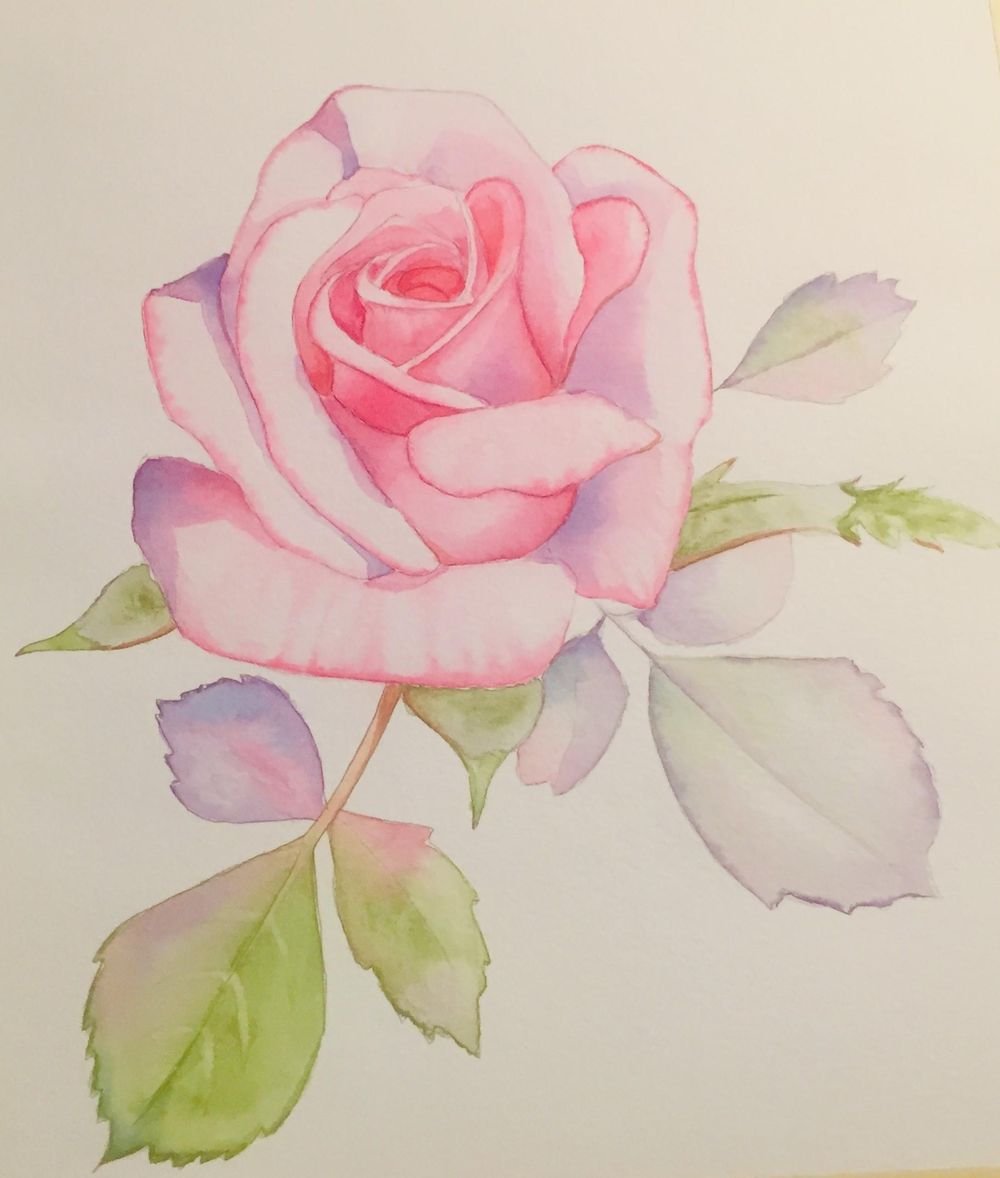 Watercolor Pink Rose for Louse De Masi's Class - image 1 - student project