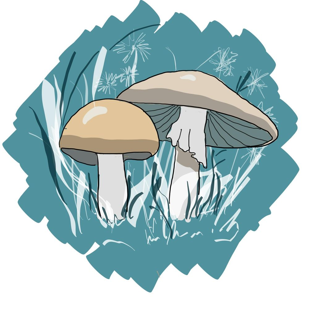 Mushrooms (3 technical) - image 3 - student project