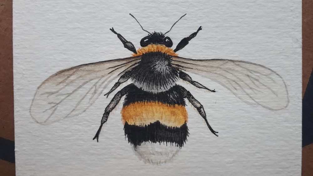 Watercolour BEE - image 1 - student project
