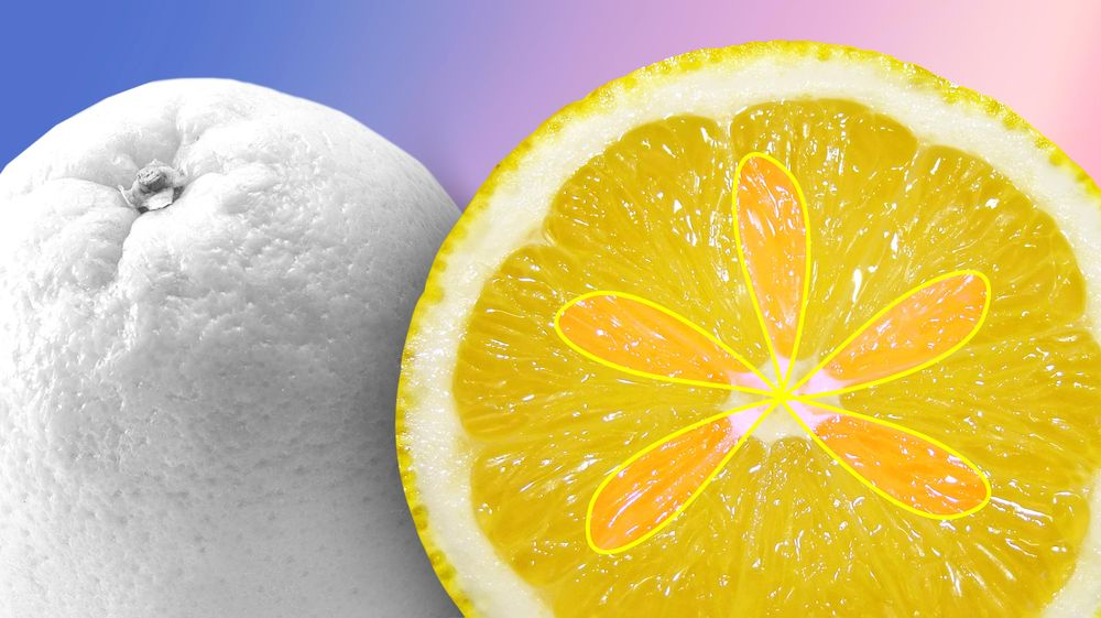 Lemon-Orange - image 1 - student project