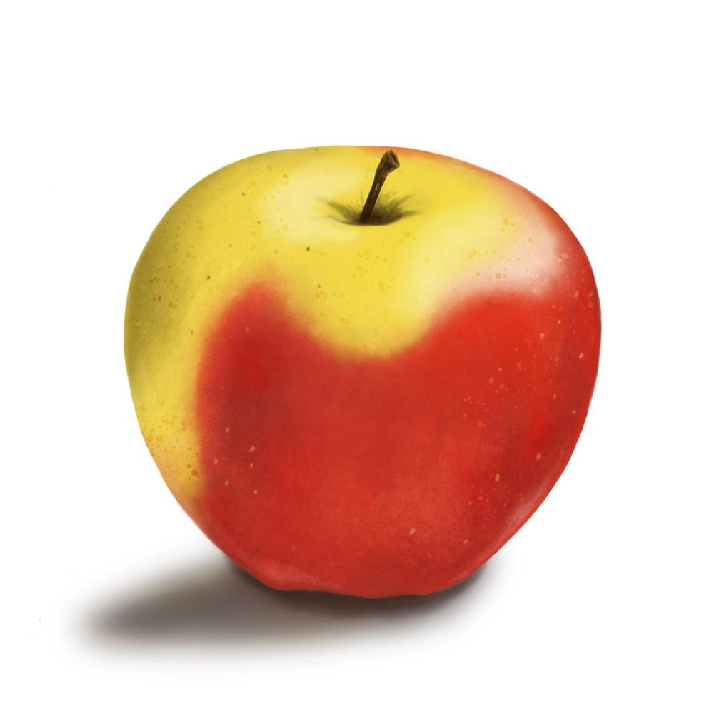 Fruit studies - image 2 - student project