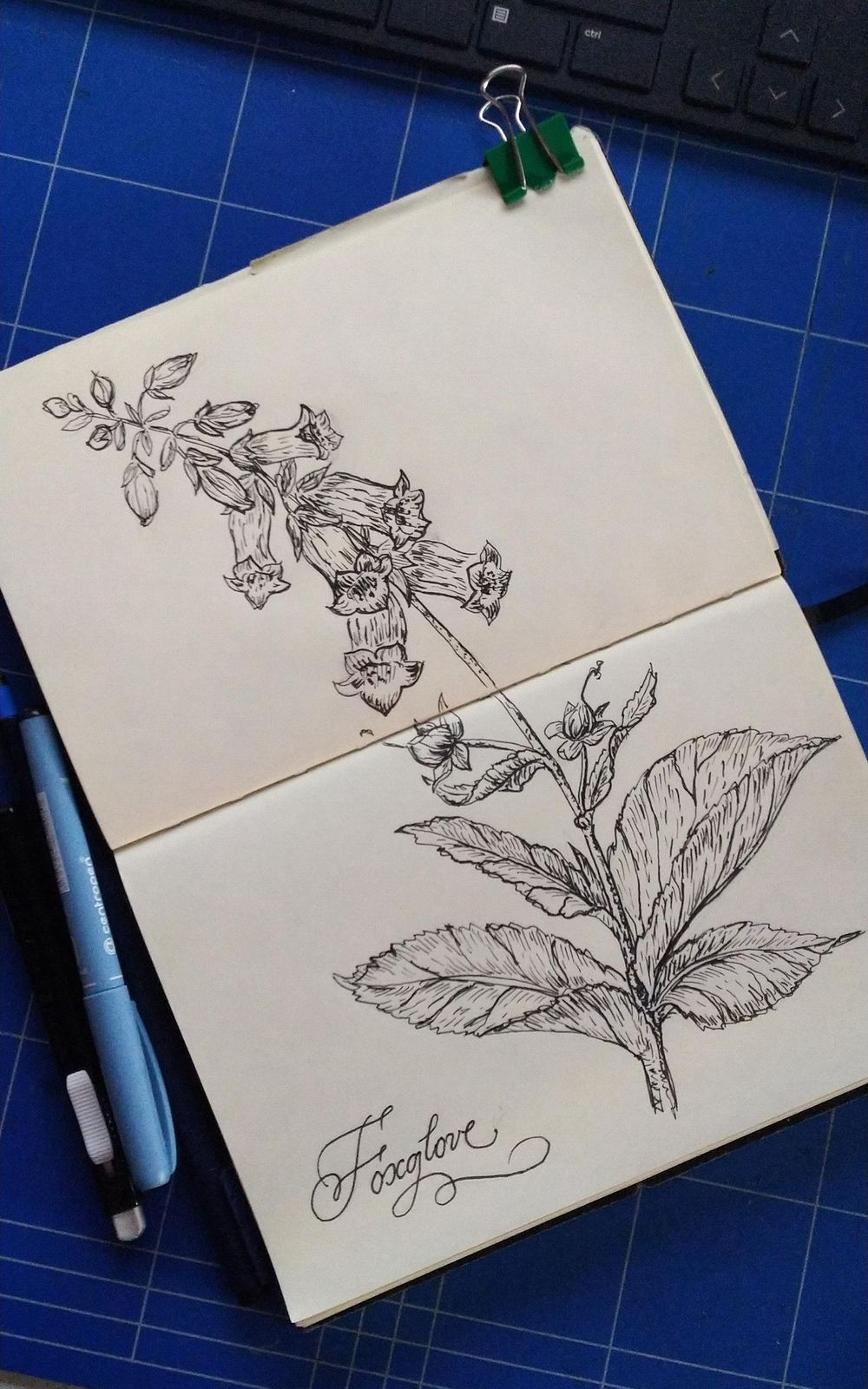 Poisonous Plants Line Drawing - image 3 - student project
