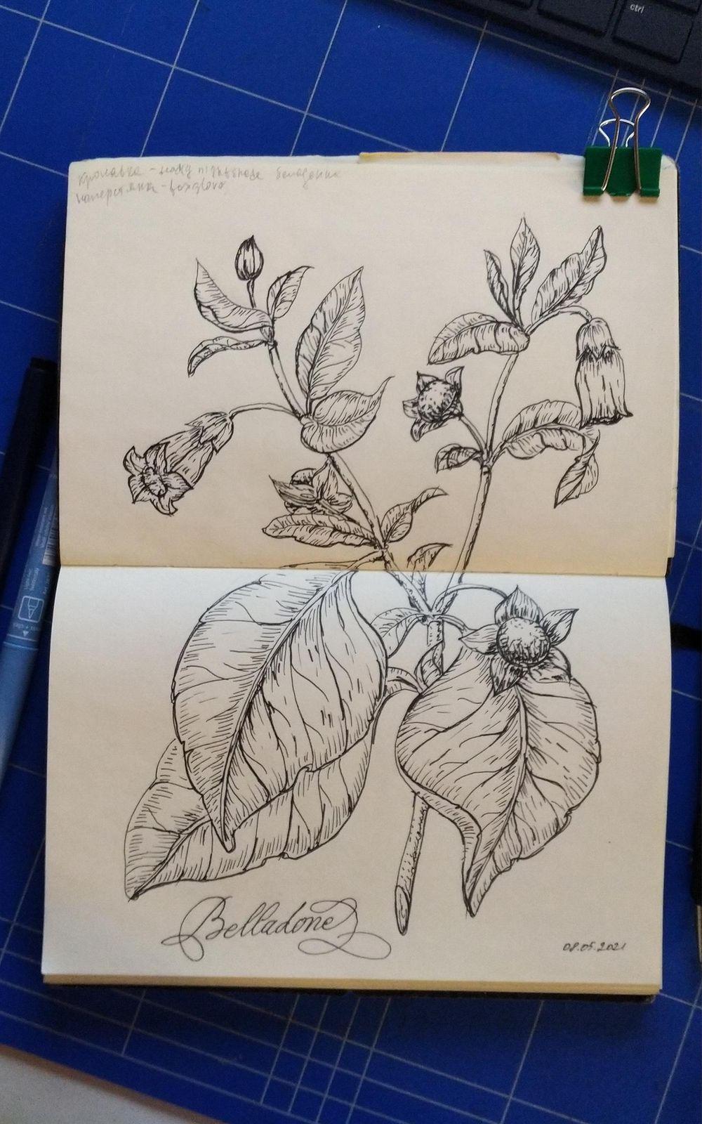 Poisonous Plants Line Drawing - image 1 - student project